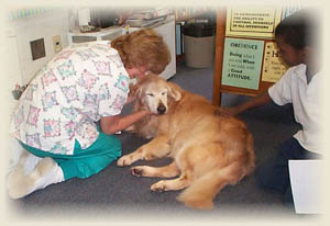 golden retrievers, golden retriever club, sandlapper golden retriever club, golden retriever pet therapy for front